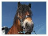 Konie, Pajęczno - targi koni 2009